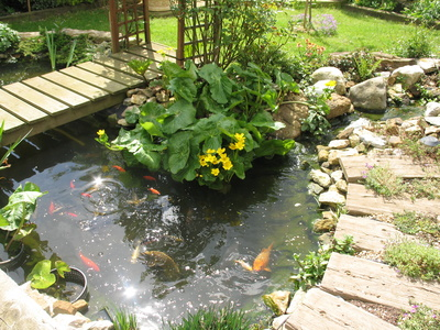 Garden fish for Fish suitable for small pond